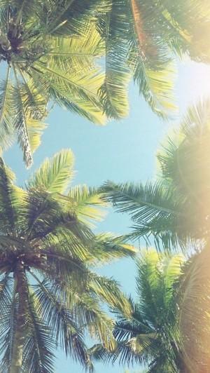 Palmy na tle nieba