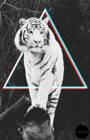 Hipsterski tygrys - tapeta