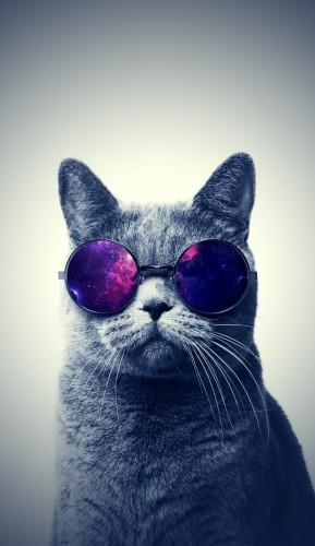 tapeta na telefon - kot w okularach